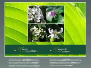 http://www.magie-des-jardins.be/