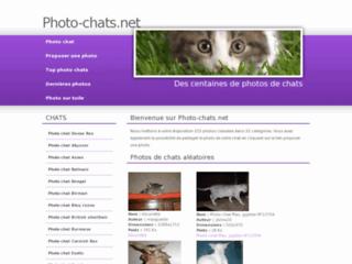 http://www.photo-chats.net/