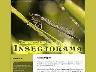 http://www.insectorama.com/